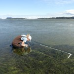 Sampling seagrass density