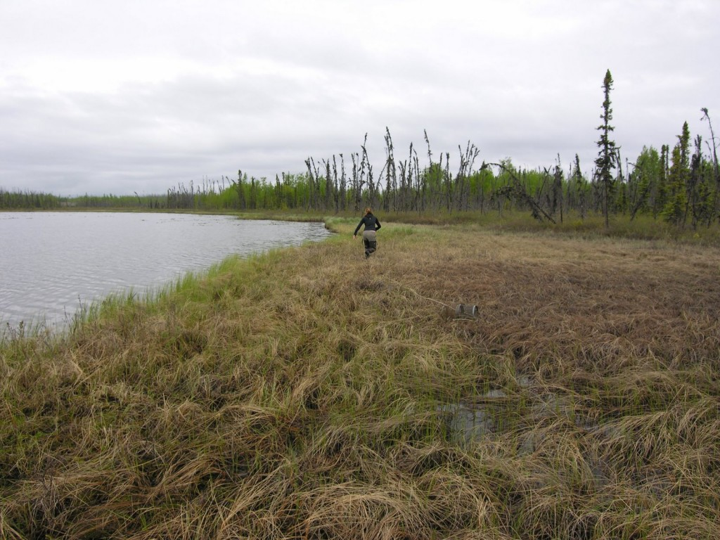 Lauren trooping out over the muskeg at Pup Lake.