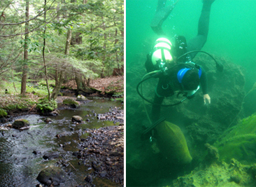 left: Silver Brook- one of Erin's study site. Right: Diving in Lake George, NY