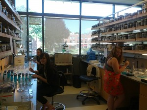 Valerie, Kendall, and Jenna working with the embryos in the lab.