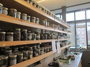 A sample of our stickleback collections